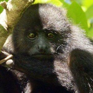 Profile photo of Howler Monkey Resort, Belize
