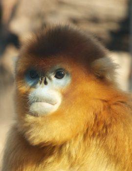 Beijing Zoo animals - monkey!